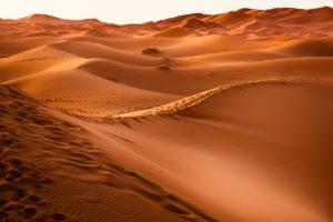 can_desert-1270345